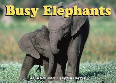 busyelephants