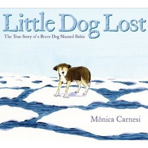 little dog lost