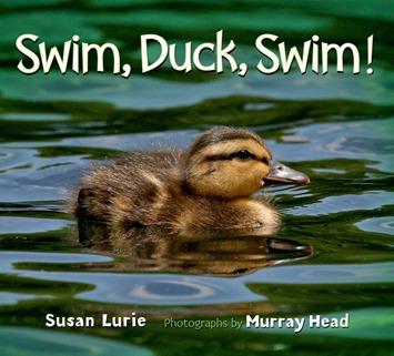 swim duck swim