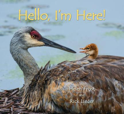 Hello, I'm Here by Helen Frost