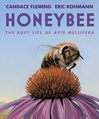 Honeybee The Busy Life of Apis Mellifera by Candace Fleming